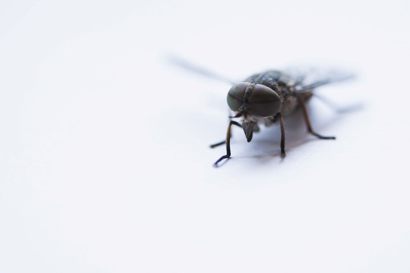 A housefly. A common pest