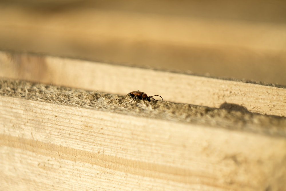 Termite walking on a piece of wood.