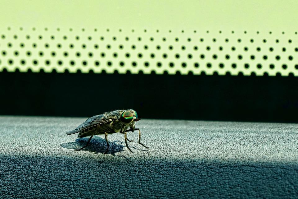 An insect on the car dashboard.
