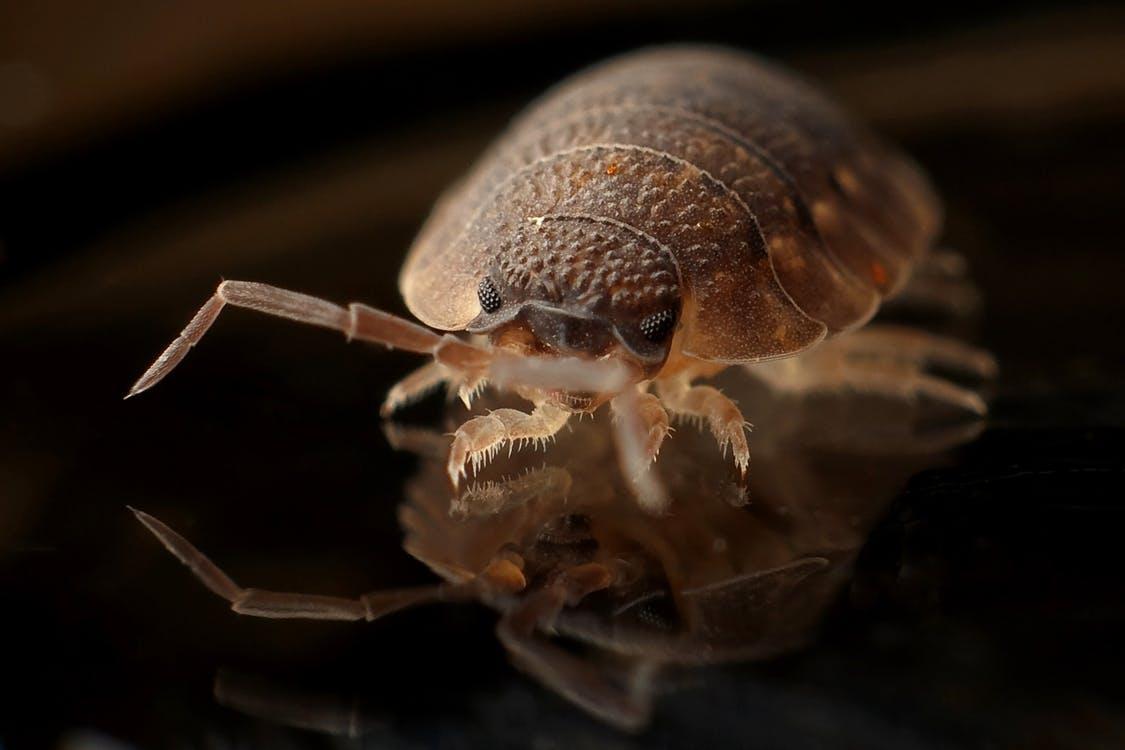Pest outbreak in Columbus