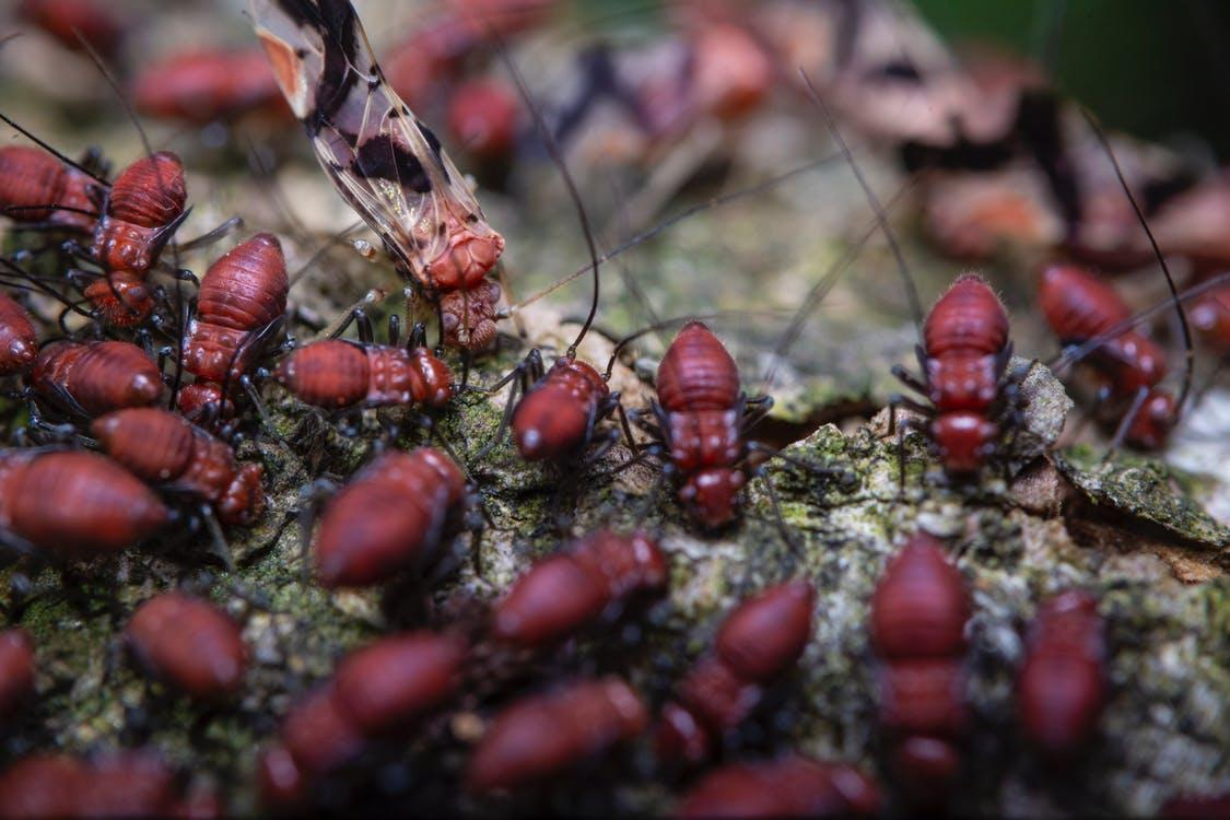 A termite infestation that needs to be eliminated by a pest control service.