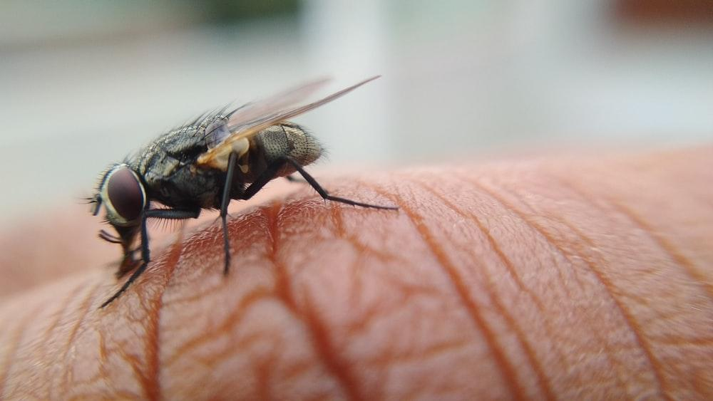 A picture of a house fly on skin
