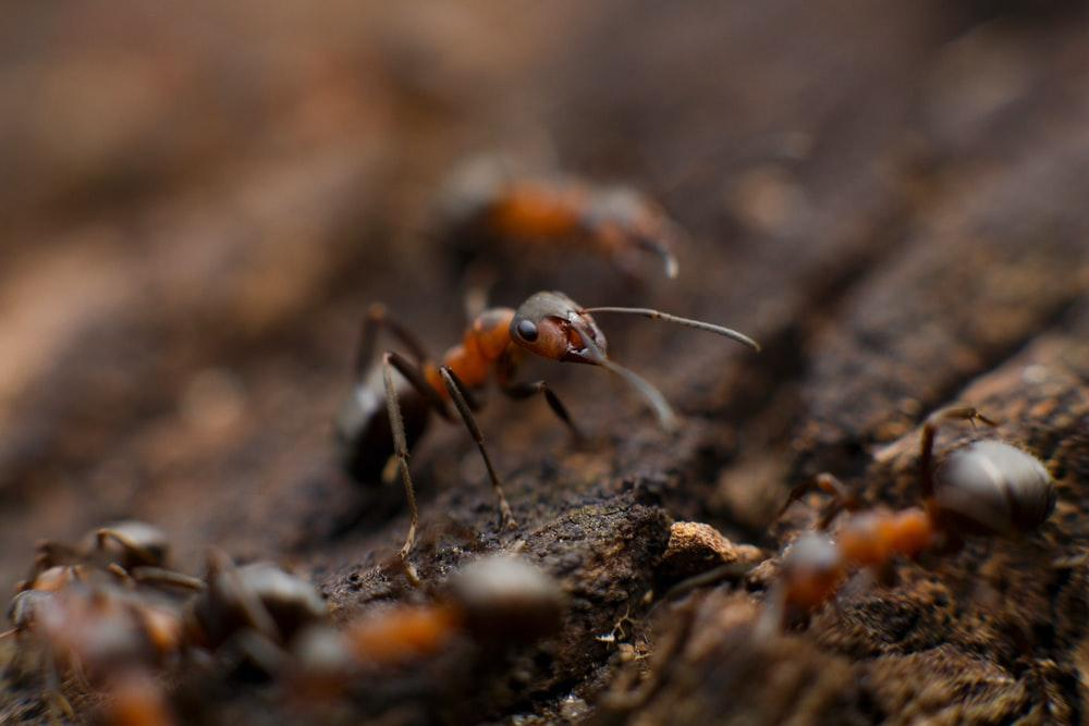defend-property-from-pests
