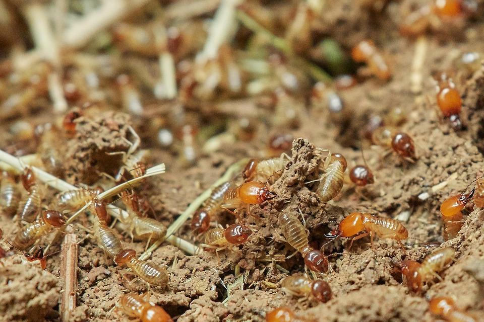 Termites in the wild hunting for food