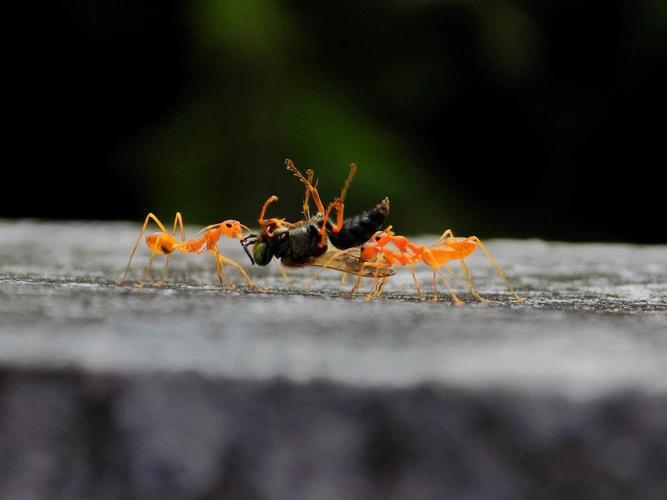 Bugs on a windowsill