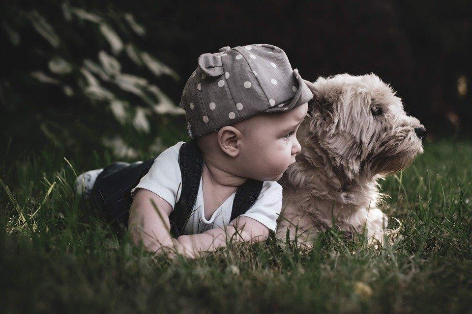 A toddler playing with his dog