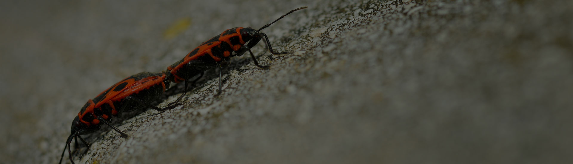 Pest Control Company Xterminator